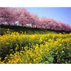 Pierwszy dzień kalendarzowej wiosny